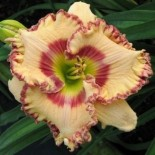 Hemerocallis 'Relevant Grafitto'