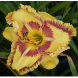 Hemerocallis 'Adventures with Jelly Maker'